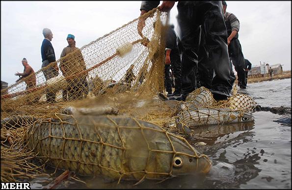بیشتر صیادان بندرترکمن درآمدی از دریا ندارند