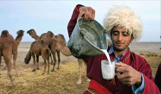 مطالعه میزان ترکیبات عمده شیر شتر در منطقه ترکمن صحرا