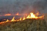 یک سال حبس برای آتش زدن بقایای گیاهی در گلستان