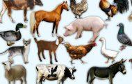 اعتقادات و باروهای ترکمن ها در مورد حیوانات