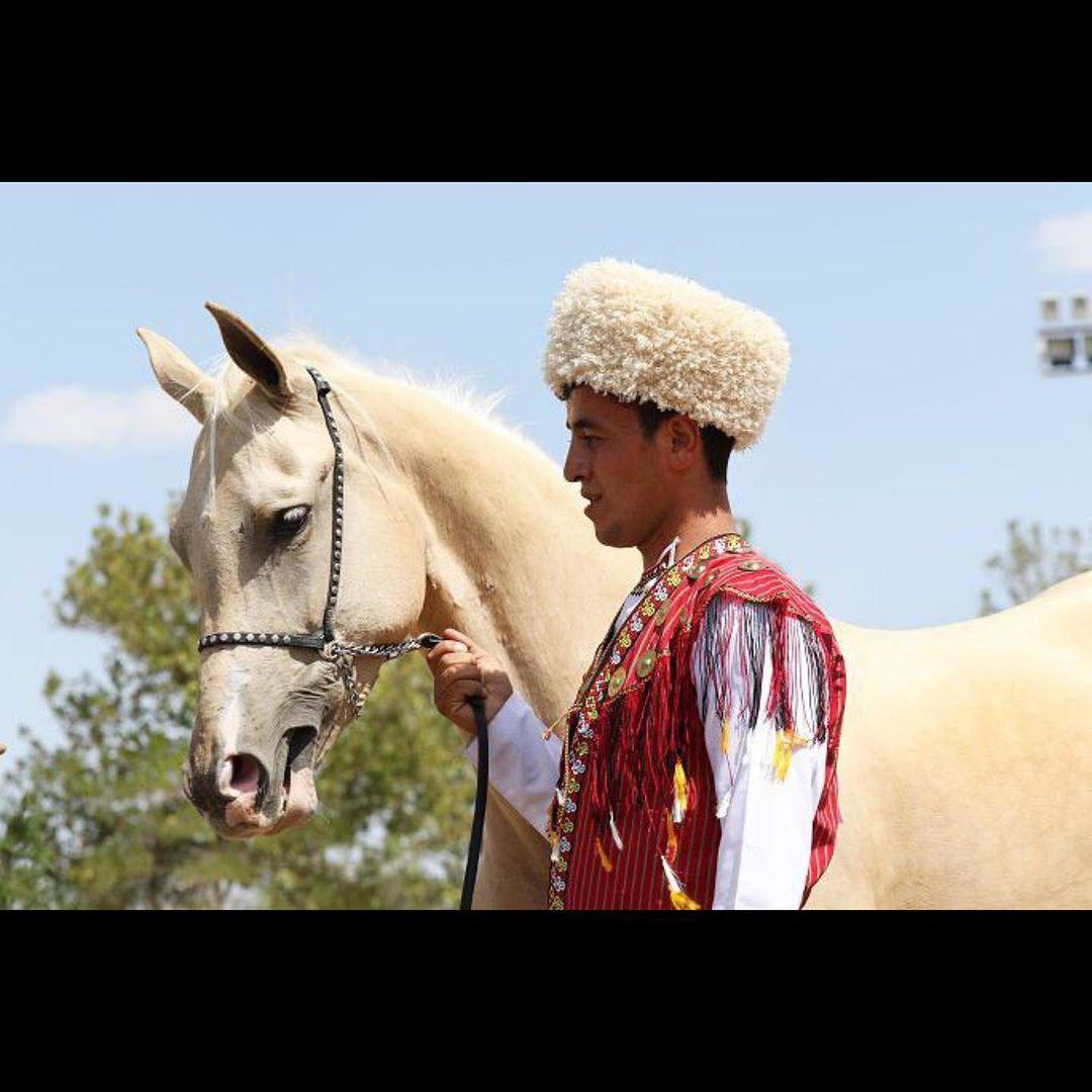 گزارشی از برگزاری اولین جشنواره زیبایی اسب اصیل ترکمن در مشهد