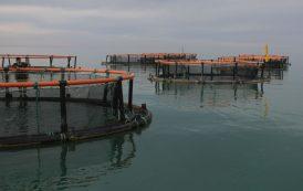 جهش تولید آبزیان خزر با پرورش ماهی در قفس
