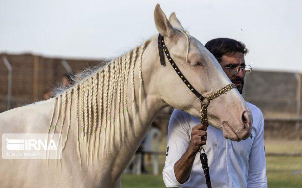 برگزاری مسابقات ملی زیبایی اسب ترکمن در علی آباد کتول