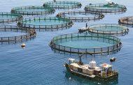 بهرهبرداری از ۱۰ قفس پرورش ماهی در آب در گمیشان